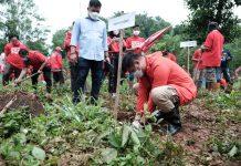 Adnan Purichta nampak turut serta dalam prosesi penanaman pohon yang digelar PDI Perjuangan di Kabupaten Gowa, Minggu (24/1/2021). (Foto: Humas Pemkab Gowa)