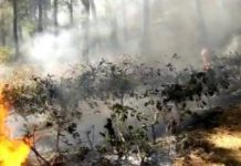 Illustrasi kebakaran hutan