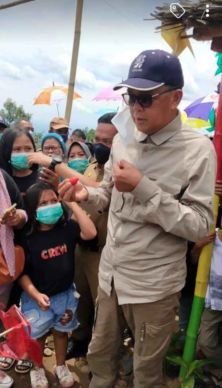 Gubernur Sulsel membaur bersama wong cilik menikmati buah strawberry di kebun rakyat Desa Bonto Tallasa, Kecamatan Uluere, Selasa (2/2/2021).