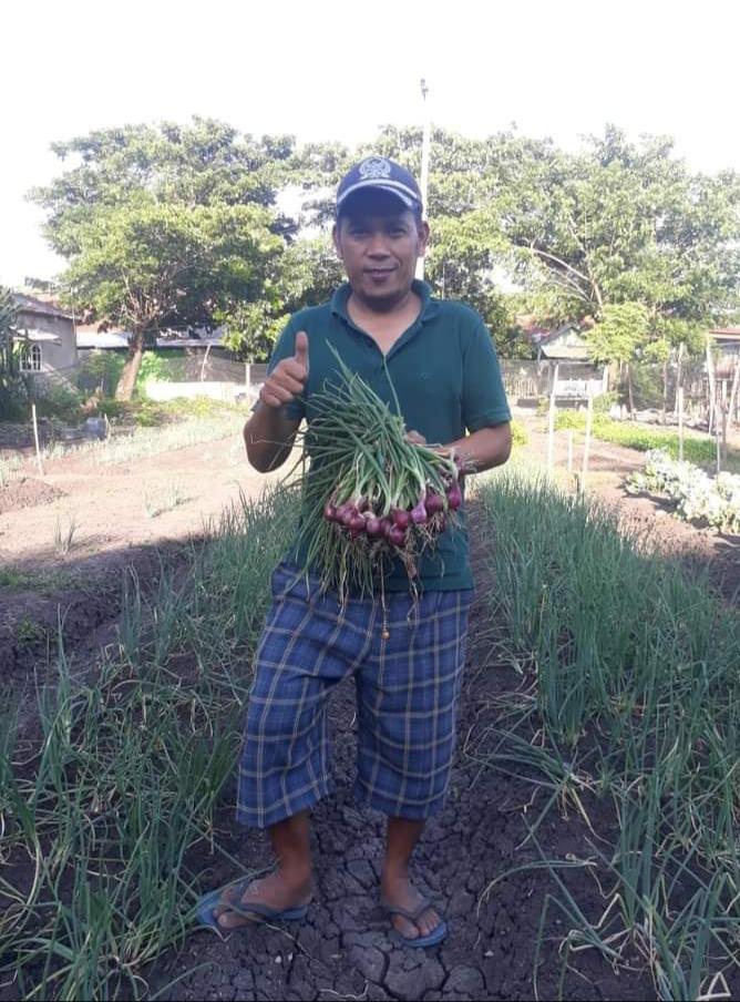 Muhammad Ridwan, menunjukkan bawang merah segar yang baru dipanennya